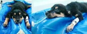 colchao-posicionamento-cirurgico-veterinaria